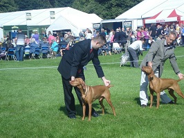 DogShowing1