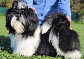 Jackie Bowns and Chase, the Shih Tzu