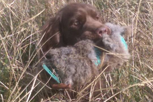 Chris Nutland and Findlay, the Sussex Spaniel