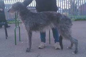 Nicola Bailey and Spirit, the Greyflax Deerhound