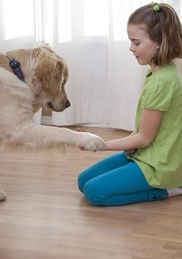 Dog Training Leicestershire