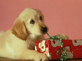KDT Christmas Hampers for your Dog
