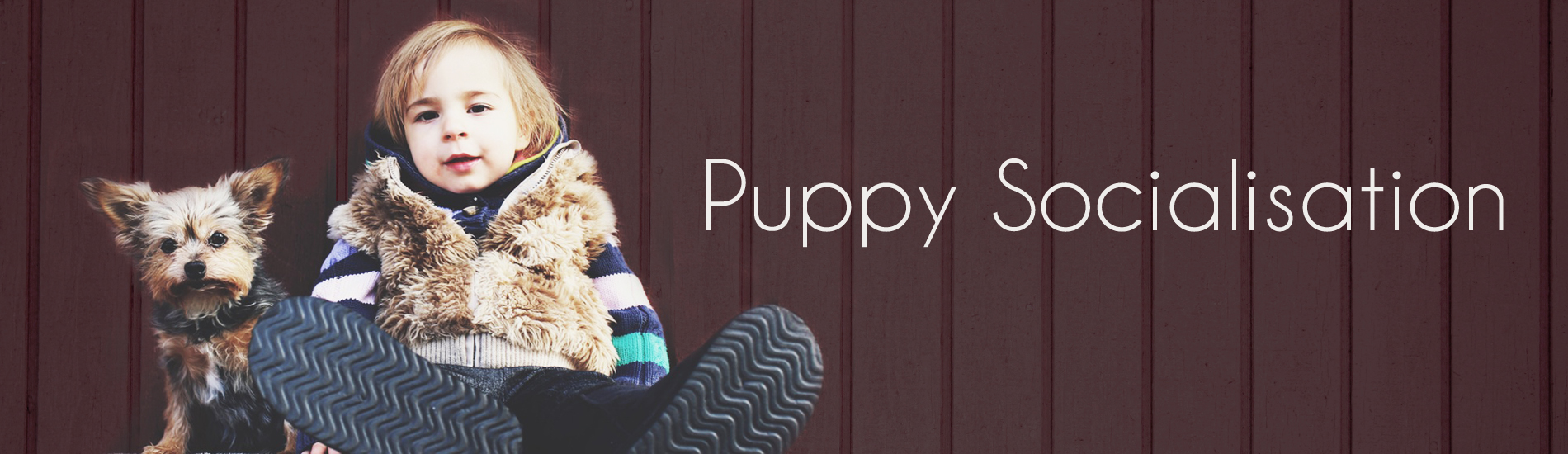 Puppy Socialisation slider