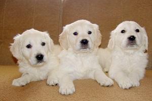 Puppy Socialisation Course Jan 16